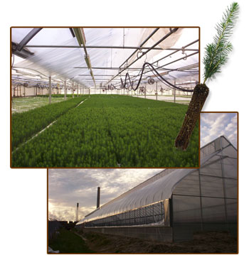 Greenhouse-Containerized Tree Seedlings