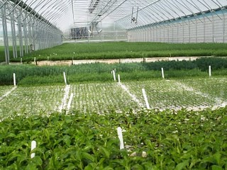 nursery of tree seedlings