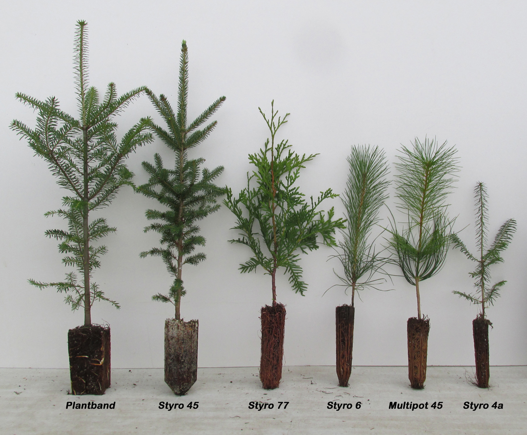 Tree Seedlings Vancouver Island