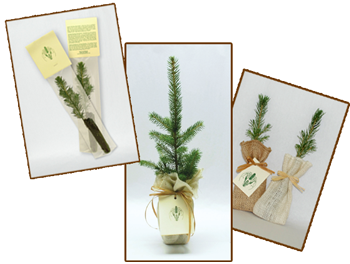 Tree seedlings for promotional, tradeshows, weddings, memorials or any special event.