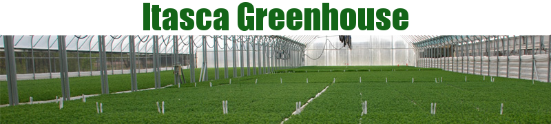 Itasca Greenhouse, Inc. - Conifer and Hardwood Tree Seedlings